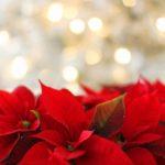 【カラータイプ®️×メイク】クリスマスはドラマチックに