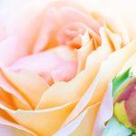 【カラータイプ®×婚活】カラータイプ®ごと婚活の進め方