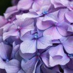 【カラータイプ®️×メイク】紫陽花カラーで上品協調メイク